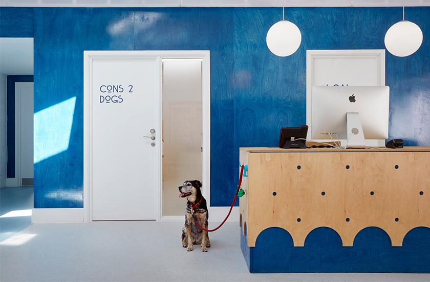 Ветеринарну клініку в Лондоні спеціально побудували так, щоб кішки та собаки не зустрічалися