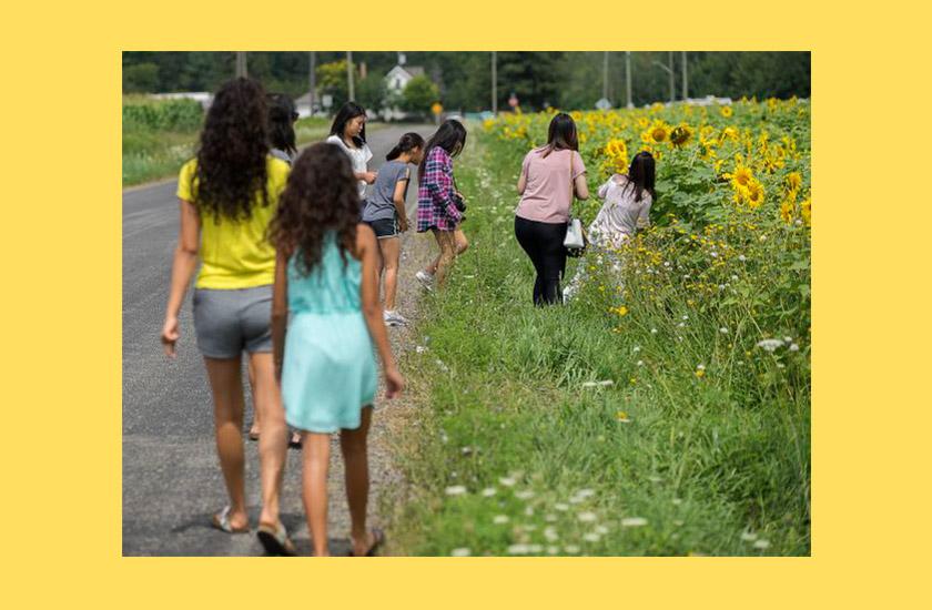 Ферму соняшників довелося закрити для відвідувачів через велику популярність в Інстаграмі