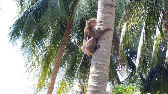 мавпи у неволі