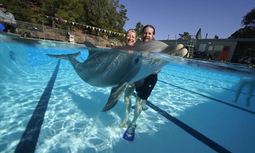 робот-дельфін