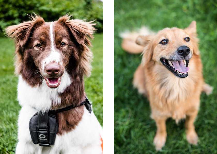 Радіо Поділ Собаки