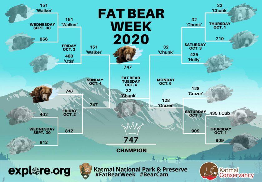 конкурс на гладкого ведмедя