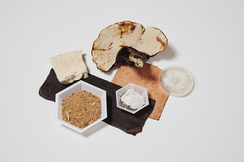 шкіру з грибів